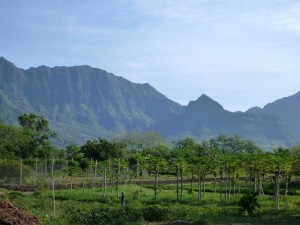 View from the Kahumana Organic Farm of fields and Mount Ka'ala